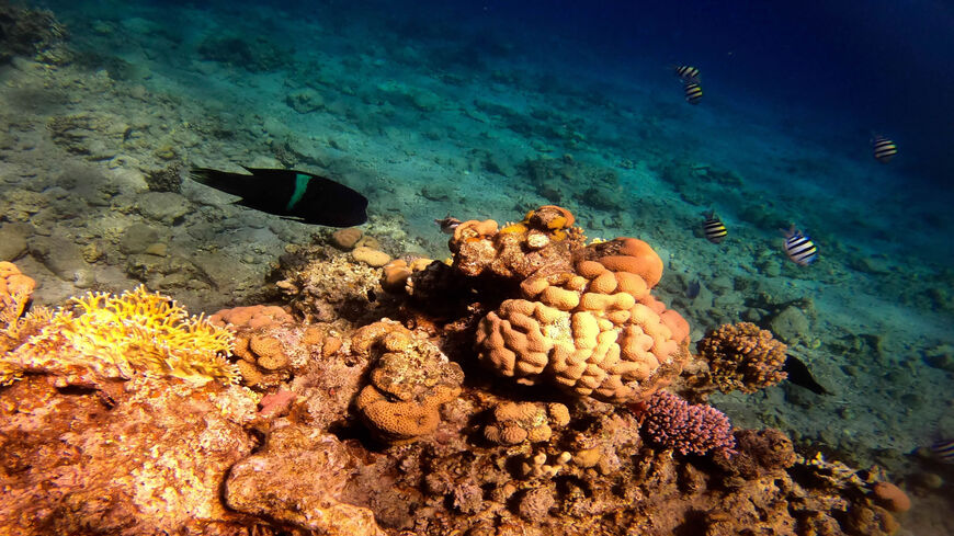 Marine life at a coral reef in the Red Sea waters off the coast of the southern port city of Eilat, Israel, Feb. 10, 2021.