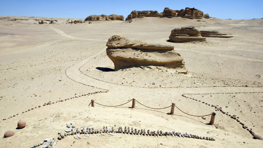 Remains of an early whale from 40-million years ago lies on the desert pavement of Wadi El-Hutan, 100 kilometers south of Cairo. About 400 skeletons of ancient water life: mammals, reptiles have been identified in what used to be an ancient shoreline.