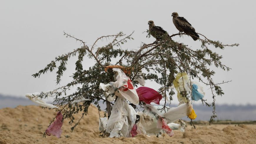Black kites sit on a tree with plastic bags clinged to it after a storm near the Dudaim dump in Israels Negev desert near the Bedouin city Rahat on January 20, 2019. - Israelis use approximately 2.7 billion plastic bags a year, which constitute 25 percent of the countrys trash volume. Since 2017 supermarkets charge a small price for the bags, following legislation aimed at diminishing their excessive use. (Photo by MENAHEM KAHANA / AFP)        (Photo credit should read MENAHEM KAHANA/AFP via Getty Images)