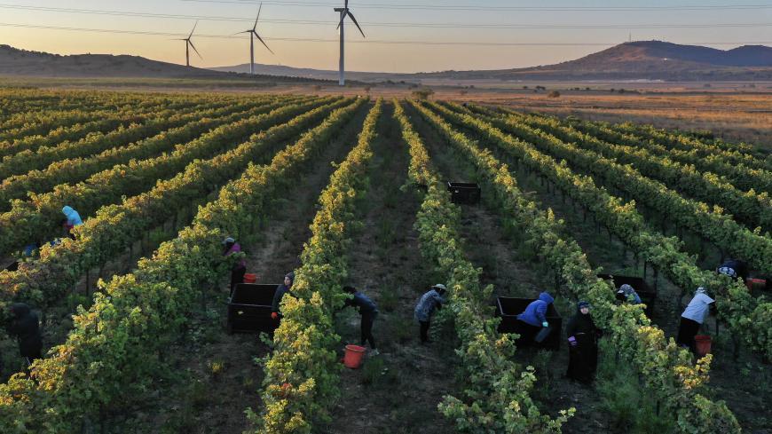 Виноградники дубае купить купить квартиру в батуми отзывы
